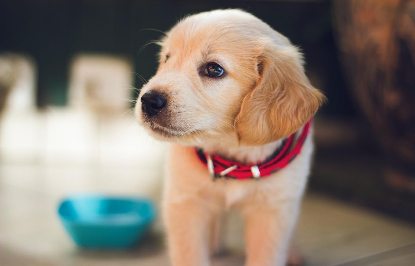 Psy po pandemii, czyli... jak postępować, aby po powrocie do ...