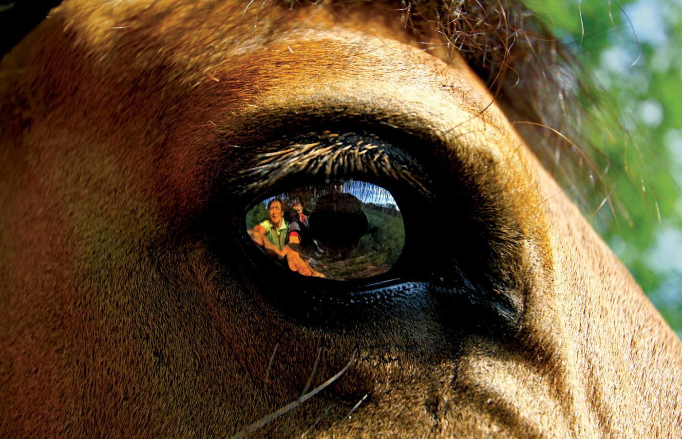 Hipoterapia Wielki Wynalazek Duńczyków Co Ma W Sobie Koń