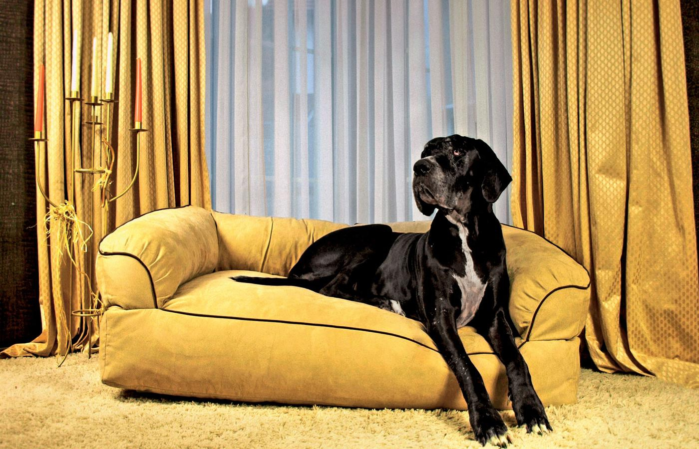 Sofa Alessy Knape z Bielska-Białej, model: Diamond Dog Bed.