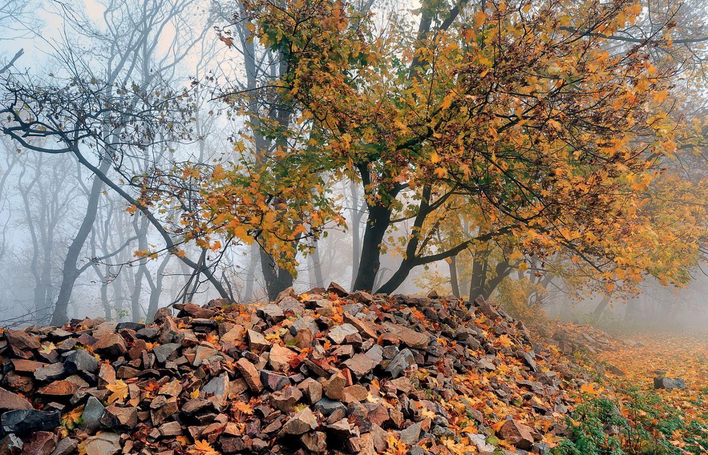 Datowanie żywego drzewa na węgiel