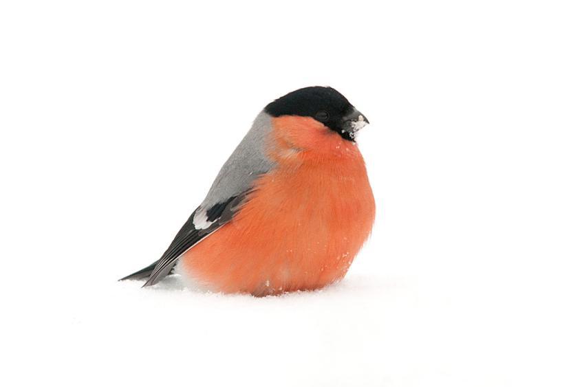 Zobacz Jakie Ptaki Zostaną Z Nami W Polsce Na Zimę Zdjęcie 1
