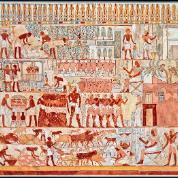 Zajęcia gospodarcze na malowidle z grobowca Nebimena, czasy Nowego Państwa. U góry widać winobranie, w części środkowej tłoczenie wina i wlewanie go do amfor, na dole znakowanie i liczenie bydła.