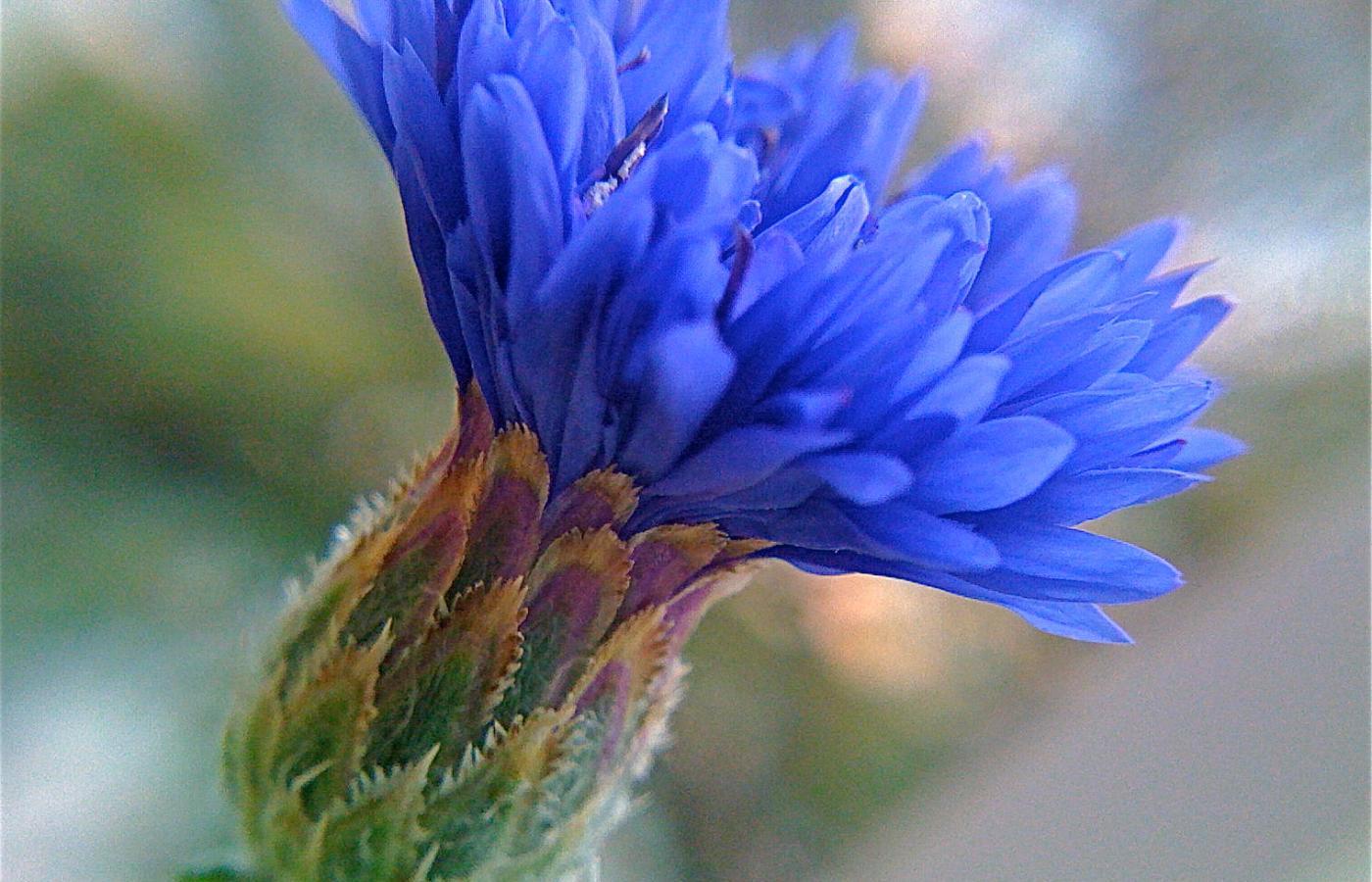 13 Kwiatow Ktore Mozna Zjesc I Dobrze Na Tym Wyjsc Polityka Pl